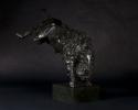 bucking-bull-078