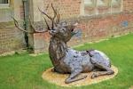 deer-brochure-124