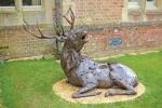 deer-brochure-125