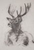 deer-brochure-010