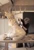 deer-brochure-107