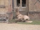deer-brochure-111