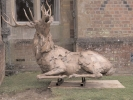 deer-brochure-114