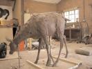 deer-brochure-015