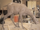 deer-brochure-020