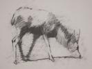 deer-brochure-006