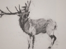 deer-brochure-007