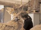 deer-brochure-085
