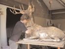 deer-brochure-088