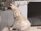 deer-brochure-091