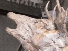 deer-brochure-093