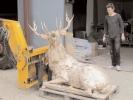deer-brochure-098