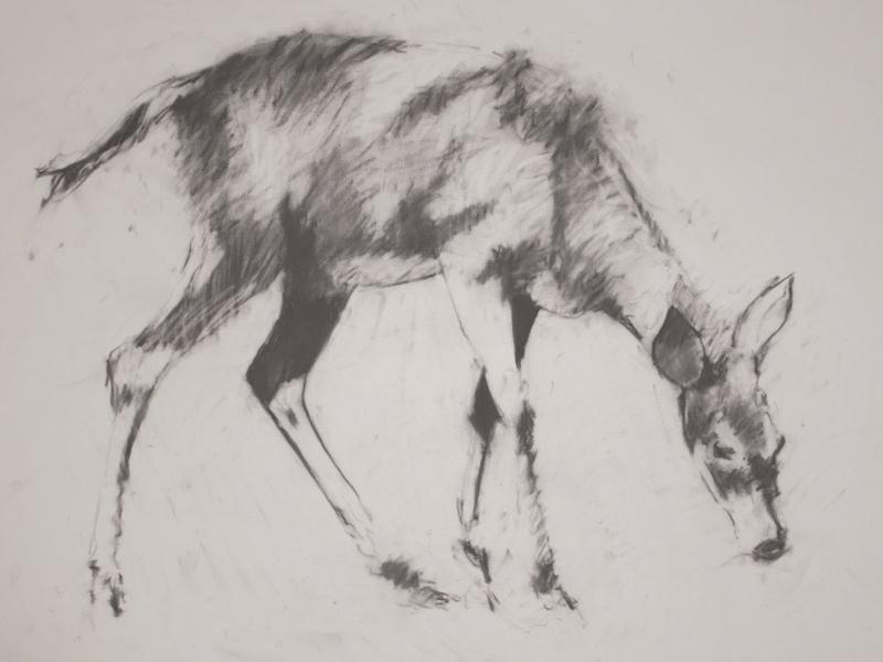deer-brochure-004