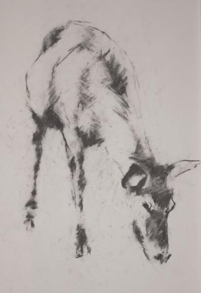 deer-brochure-008