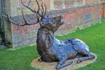 deer-brochure-121