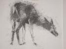 deer-brochure-005