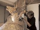 deer-brochure-086
