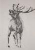 deer-brochure-009