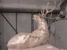 deer-brochure-096