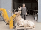 deer-brochure-099
