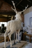 red-deer-pics-009