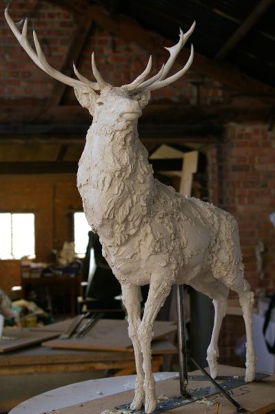 red-deer-pics-004