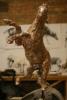 stalion-bare-bronze-4